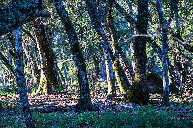 napa valley forest