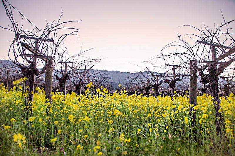 vinery napa valley